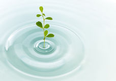 Green plant growing Royalty Free Stock Photo