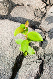 Green plant growing through asphalt. A green plant growing through a crack in the asphalt stock image
