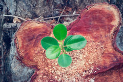 Green plant growing on the bole of a tree cut off royalty free stock images