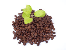 Green plant growing on a coffee beans Royalty Free Stock Photography