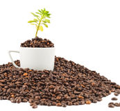 Green plant growing from the coffee beans Royalty Free Stock Image