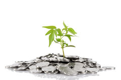Green plant growing from the coins Royalty Free Stock Images