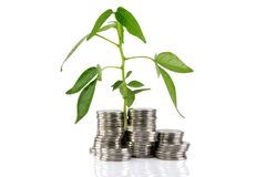 Green plant growing from the coins Stock Photo