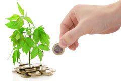 Green plant growing from the coins. Royalty Free Stock Photography