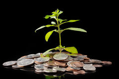 Green plant growing from coins on black background. Investment and business concept Royalty Free Stock Photography