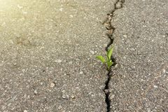 Green plant growing from crack in asphalt. Green plant growing from crack in asphalt stock photo