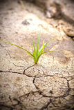 Green plant growing from cracked earth. New life. Stock Images