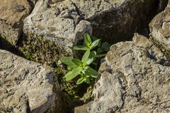 Plant growing between cracks of earth stock images
