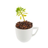 Green plant growing from the cup Stock Images