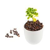 Green plant growing from the cup Royalty Free Stock Photography
