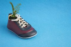 Green plant growing in cute childish sneakers isolated on blue background. Creative floral pot Royalty Free Stock Photography