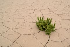 Green plant growing on dry cracked earth royalty free stock image