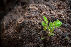 Green plant growing on earth Stock Photography
