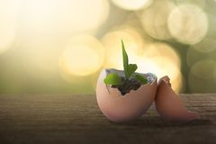 Green plant growing in egg shell concept stock photo