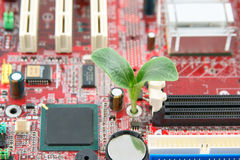 Green plant growing through electronic circuit boa Royalty Free Stock Images