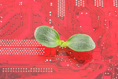 Green plant growing through electronic circuit boa Royalty Free Stock Image