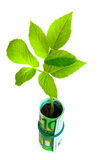 Green plant growing from euro money Stock Photo