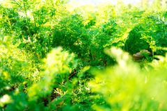 Green plant growing in the garden fresh royalty free stock image