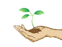 Green plant growing in hand Royalty Free Stock Image
