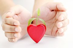 Green plant growing from heart Stock Photo