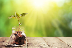 Green plant growing in a jar with savings Coins Royalty Free Stock Photography