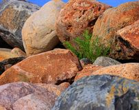 Green Plant Between Large Rocks royalty free stock photo