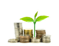 Green plant growing on money coins over white background, business Royalty Free Stock Images
