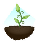 Green plant. Growing from natural soil Royalty Free Stock Photography