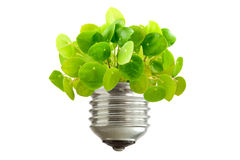 Green plant growing out of a bulb Stock Images