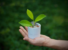 Green plant growing out of coins in white cup on hand nature background royalty free stock photos