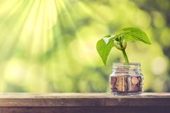 Plant Growing Out of Coins royalty free stock photography