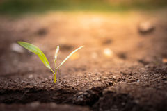 Green plant growing out of cracks in the earth. Stock Photography