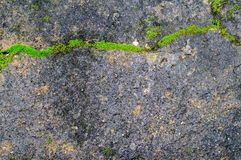 Green plant growing out of floor concrete  with cracked abstract Stock Photo