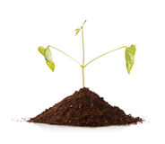 Green plant growing from a pile of soil Stock Photo