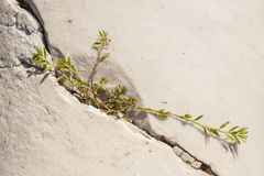 Green plant growing in rock crack Stock Image