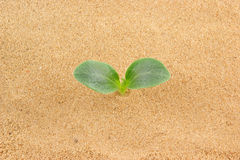 Green plant growing through sand Stock Image