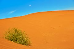 Green plant growing in sand dunes Royalty Free Stock Photos
