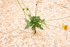 Green plant growing Royalty Free Stock Photography