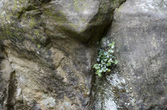 Green Plant growing on sand stone Stock Photography