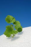 Green plant growing in snow stock images