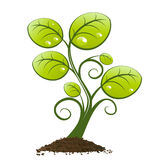 Green plant growing from soil. Decorative illustration of green plant growing from pile of earth or soil, isolated on white background Stock Image