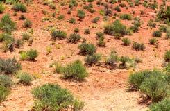 Green plant growing trough dead soil. Royalty Free Stock Photo