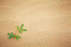 Green plant growing trough sand Stock Photo