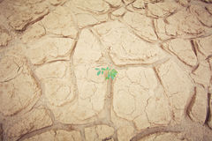Green plant growing trough sand Stock Photography
