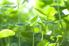 Small green plant growing under sun shine Stock Image