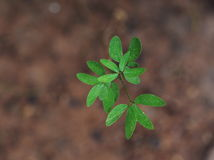Green plant growing up Royalty Free Stock Photography