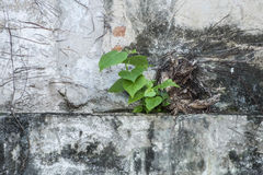 Green Plant Growing Stock Image