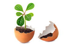 A green plant grows in an egg. Royalty Free Stock Photos
