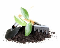 Green plant grows from the ground with garden tools Stock Photos