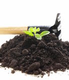Green plant grows from the ground with garden tools Stock Images